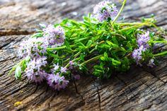 Šetraj - začimba sreče, ki nas poživi in domače zdravilo Herb Seeds, Garden Seeds, Planting Seeds, Summer Savory, Savory Herb, Companion Planting, Korn, Fast Growing, Herb Garden