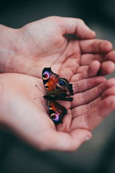 When I was little, I found a butterfly with a broken wing who was sitting on a leaf and trying to fly. I picked it up carefully, and watched it beating it's little wings. After a while I suppose it was fine, and it flew away. I wished I could have that freedom, and fly with my friend the butterfly  xxxxx