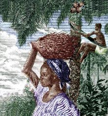 Poulet Miambe - harvest of african oil palm (palm nuts) and coconut in guinea