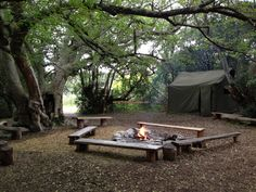 The camping site (under the shadow of a 1000-year old White Stinkwood tree) at Platbos Forest Retreat, Gansbaai, Western Cape, South Africa