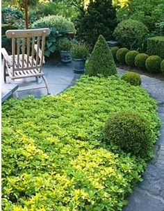 Pachysandra terminalis and clipped Buxus topiary