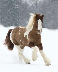 15 cavalos tão bonitos que vão deixar você sem fôlego