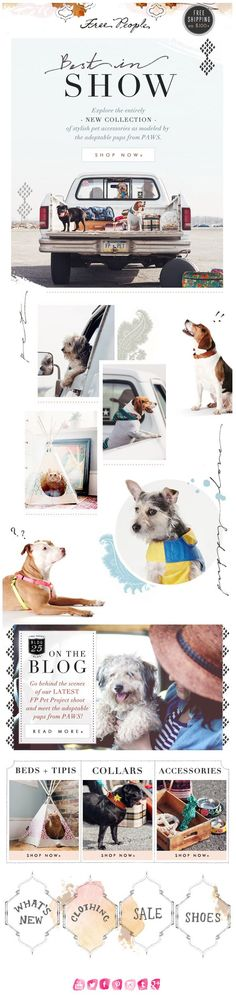 Free People Email : New line of dog clothes modeled by adoptable dogs from PAWS — what a great idea | via RedBird Paperie