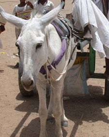 GNN - Deprecated: Function ereg_replace() is deprecated in /opt/www/gnn/htdocs/gnn_include/php/articlelayout.php on line 142 Out of Africa: The Origin of Donkeys