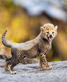"""WILD PLANET on Instagram: """"Have you ever seen a Cheetah cub? Photo by @paultje_nl #WildPlanet"""" Nature Animals, Animals And Pets, Baby Animals, Cute Animals, Wildlife Nature, Baby Cheetahs, Cheetah Cubs, Portrait Studio, Wildlife Photography"""