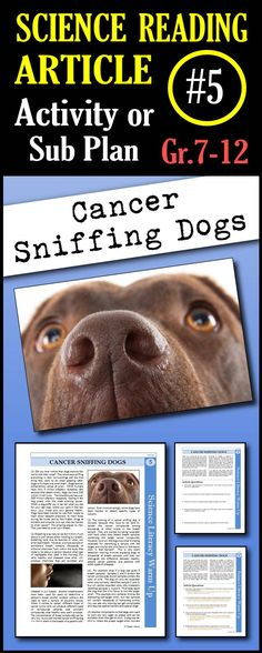In this article, students will read about how a sample of someone's breath can contain compounds released from cancer cells, how sensitive dogs are to scents and how dogs are trained to detect cancer compounds in samples of patients' breath. This is a great in class activity, homework assignment, weekly science reading assignment, sub plan or in school suspension plan.  Use this to save time looking for engaging and appropriate articles with questions!