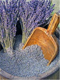 *Lavender