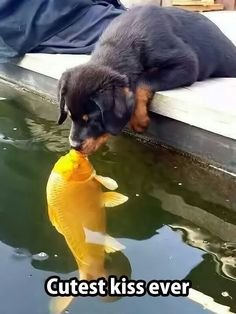 Cutest kiss ever