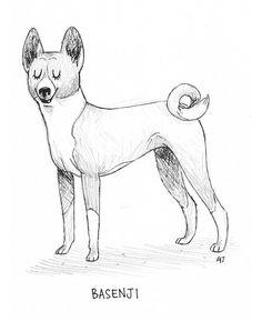 Dog a Day # 14 - Basenji