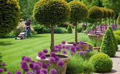 Alan Titchmarsh's secret garden. Vivid purple alliums. Picture: JONATHAN BUCKLEY.