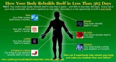 Your body renews itself continuously