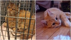 Cat Who Lost  Leg And Tail In Horrible Accident Learns To Love And Trust Again