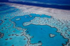 The Great Barrier Reef, the 'heart shaped' coral, Australia by samuelgagnon on Flickr.