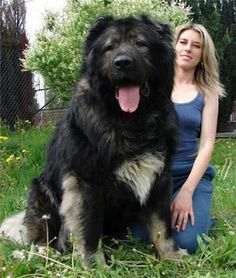 That dog is just too big. He could eat that woman.