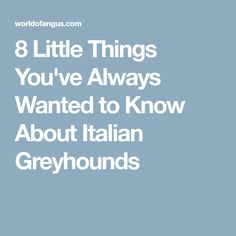 8 Little Things You've Always Wanted to Know About Italian Greyhounds