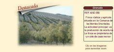 AND559 Granada.  Olivar y coto de caza en venta