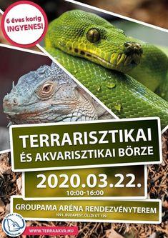 Terrarisztikai Börze 2020. Terra-Akva Terrarisztikai és Akvarisztikai Börze - Programturizmus Budapest, Animals, Animales, Animaux, Animal, Animais