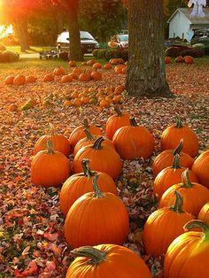 I really love pumpkins