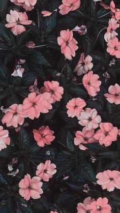 art wallpaper Marvelous Flower Wallpaper for Sytle Your New iPhone Flor Iphone Wallpaper, Iphone Background Wallpaper, Pastel Wallpaper, Tumblr Wallpaper, Aesthetic Iphone Wallpaper, Nature Wallpaper, Aesthetic Wallpapers, Iphone Backgrounds, Iphone Wallpapers