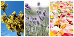 Retete de spray tonic pentru ten Homemade, Floral, Painting, Art, Art Background, Home Made, Flowers, Painting Art, Kunst