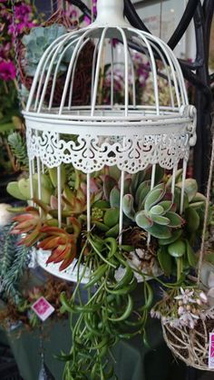 suculentas dentro de jaula - Google Search Mini Mundo, Plant Hanger, Indoor Plants, Cactus, Birds, Book 1, Painting, Google, Home Decor
