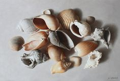 Shells on White, 24 x 35 cm, oil on canvas