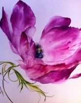 KIRKCUDBRIGHT: Left Bank Gallery. Summer Exhibition to 27th August. Barbara Allen, Clare Robinson, Jane Jackson and Helen Ryman.  Image Magenta Anemone, Clare Robinson. Prints available http://www.arttokens.co.uk/works/fuschia-amemone/