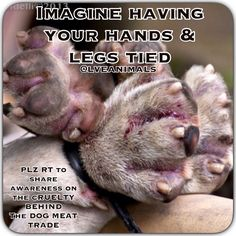 THE BEGINNING OF THE DOG MEAT FESTIVAL COMING SOON #yulingetdogsoffthemenu MAKE IT STOP