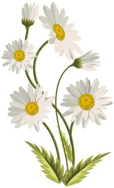 All Details You Need to Know About Home Decoration - Modern Daisy Painting, Painting & Drawing, Daisy Drawing, Flower Backgrounds, Flower Wallpaper, Watercolor Flowers, Watercolor Paintings, Daisy Art, Flower Pictures