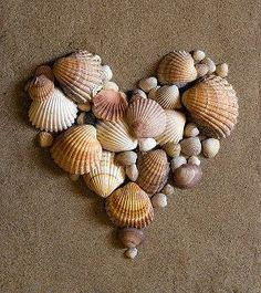 Heart sea shell collage