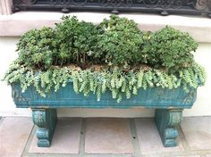 Container Gardens-from The Everyday Home