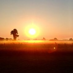 Good Morning from our farm!