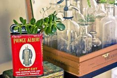 Jade tree planted in a vintage tin!