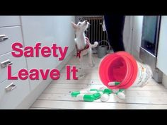 The Safety Leave It- A MUST for every dog! - clicker dog training  	    	  		This is a great exercise to teach ANY dog! You can train ANY dog to do never go for dropped food ANYWHERE... Or you could train your dog never to go for dropped food only in the kitchen. I like to toss food as a reward for my dogs when training complex tricks and obedience. So I let them go for food that I throw during training sessions. If you plan to NEVER let your dog go for dropped food, then when you ar