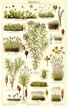 moss varieties - Google Search