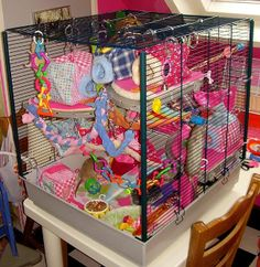 Pet Mice, Pet Rats, Pets, My Animal, Animal Pictures, Pet Rat Cages, Rat Toys, Sugar Gliders, Bucky
