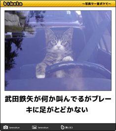 武田鉄矢が何か叫んでるがブレーキに足がとどかない Car Cat, Geek Games, Delete Image, Image Title, Media Images, Nerd Geek, Image Sharing, I Love Cats, Cat Lovers