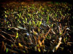 evocation of springtime