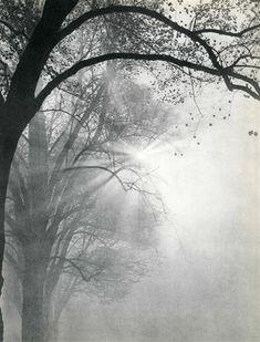 Emmanuel Sougez (French, 1889-1972), Rayons d'automne. Original vintage photogravure. c1938.