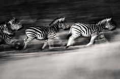 """Twilight Ghosts"" by Danie Bester 
