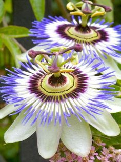 Passion Flower, Valerian Root & Lemon Balm can help with insomnia.