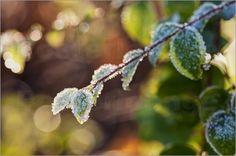 Uta Naumann - mit Frost bedeckter Zweig