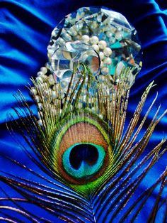peacock...photo by Joy Fussell