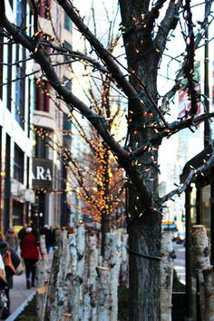 Christmas in the City  Chicago holiday decorations Magnificent Mile