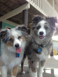 Worlds most adorable pups! <3