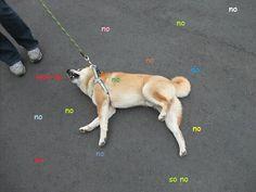 Wow Doge - Imgur