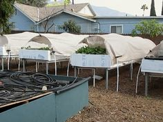Can you make a living from suburban, backyard aquaponics?