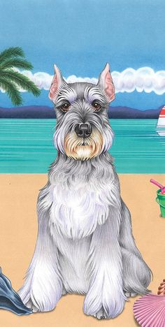 Ranked as one of the most popular dog breeds in the world, the Miniature Schnauzer is a cute little square faced furry coat. Schnauzer Grooming, Miniature Schnauzer Puppies, Giant Schnauzer, Schnauzer Puppy, Standard Schnauzer, Dog Grooming, Most Popular Dog Breeds, Yorkshire Terrier Puppies, Dog Art