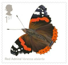"""Red Admiral = No.1 in the """"Butterflies Whose Latin Name Would Be Good For A (Female) Pop Star"""" series..."""