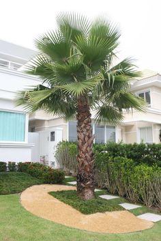 Washingtonia robusta, a palmeira do jardim 1 da fachada. Palm Trees Landscaping, Tropical Landscaping, Landscaping With Rocks, Backyard Landscaping, Mediterranean Garden Design, Tropical Garden Design, Tropical Plants, Palm Garden, Facades